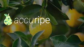Accuripe